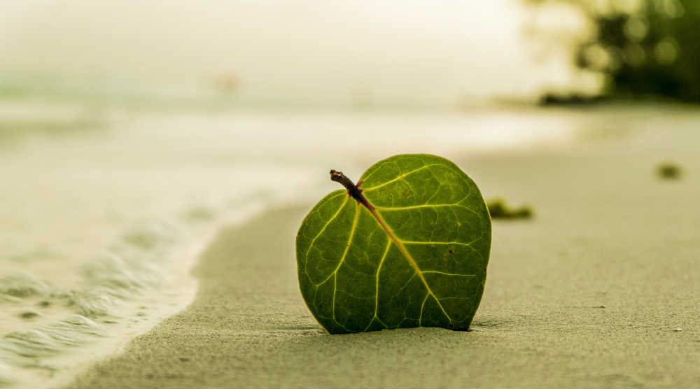 A photo of a leaf on a beach from the free stock photo site Pexels.