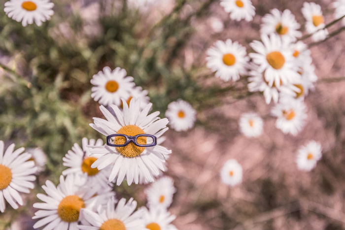 A free stock photo from Gratisography.com featuring daisies.