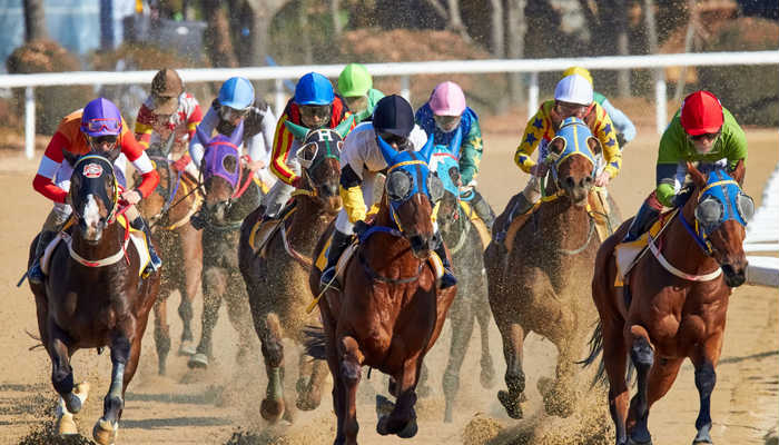 A photo of horses racing. Image:Unsplash.com.